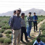 بازدید علمی دانش آموزان از مزرعه پرورش گیاهان دارویی